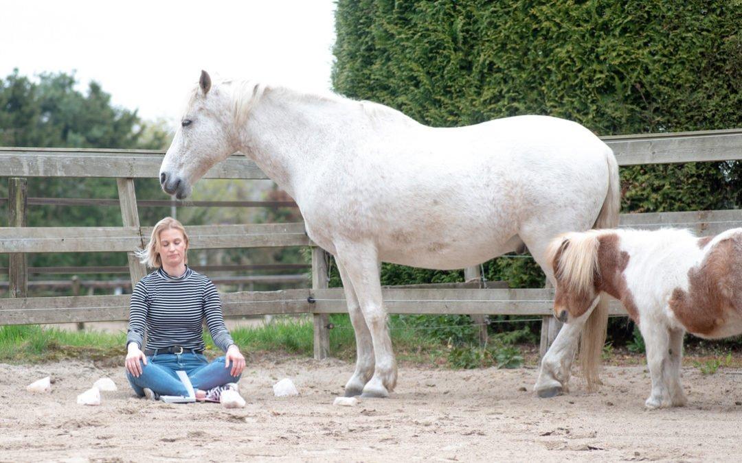 Transformatie Retreat met Paarden op de Veluwe