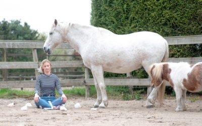 3-Daagse Retreat met Paarden op de Veluwe